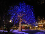 Tree with Blue Lights on Wilcox...
